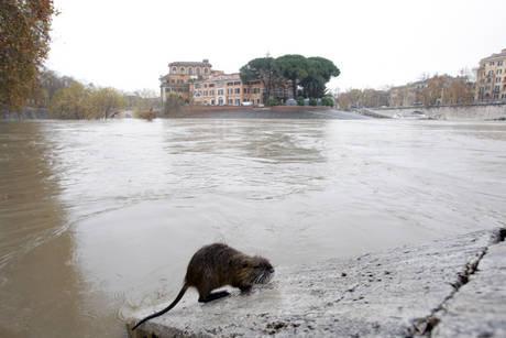 un simpatico alluvionato